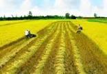 Cách tính thuế sử dụng đất phi nông nghiệp